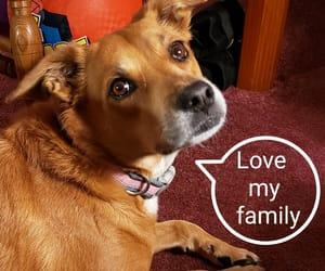 dog, gia, and pet image