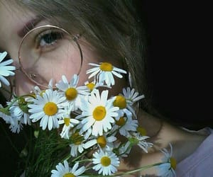 daisies, tumblr, and daisy image