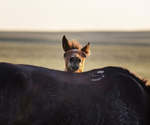 animals, horses, and country living image