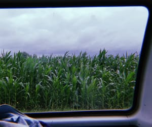 car, dope, and field image