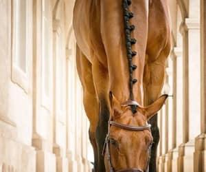 horse, natural, and naturaleza image