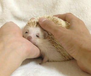 adorable, animal, and blanket image