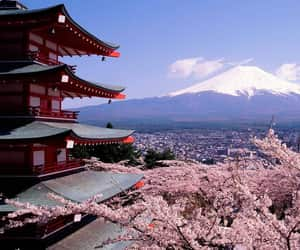 japan, sakura, and travel image