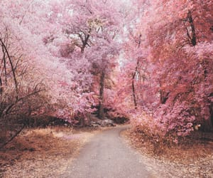 cherry blossom, hipster, and indie image