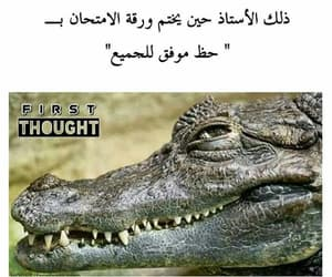 arabs, dz, and funny image