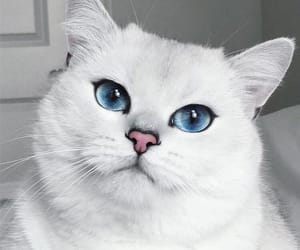 cat, animals, and blue image