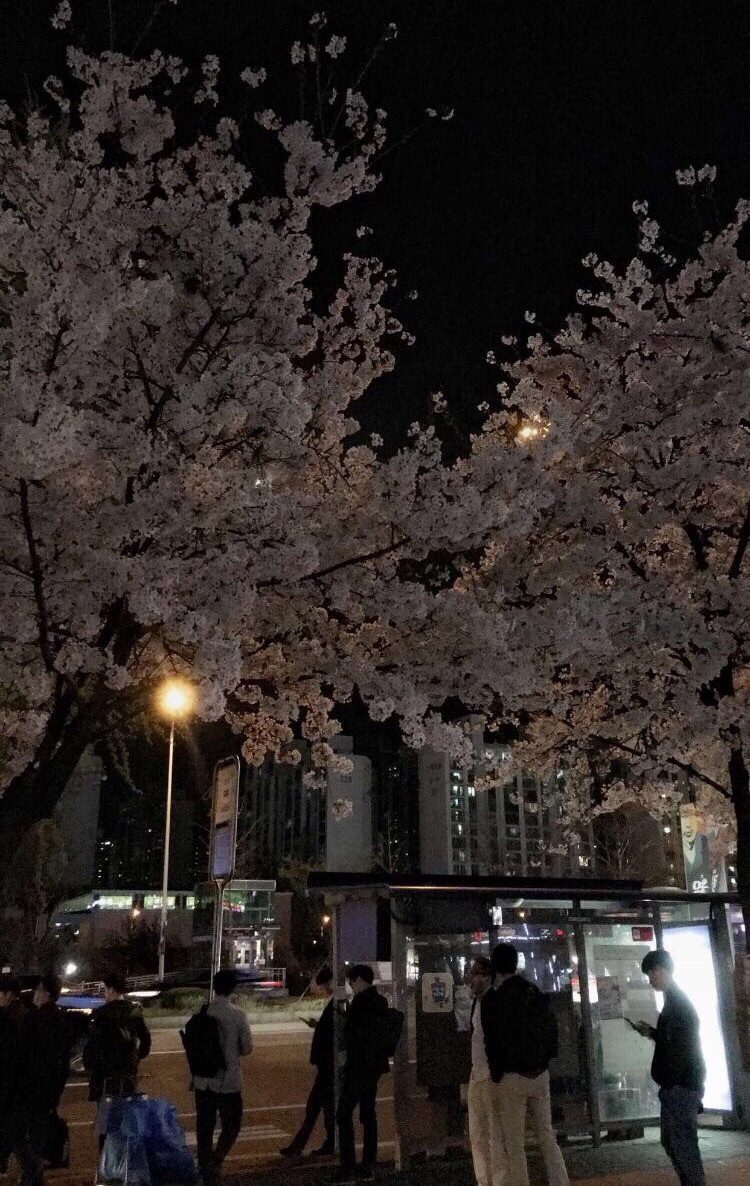 night, aesthetic, and spring image