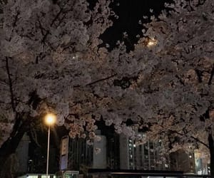 night, trees, and aesthetic image