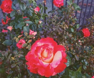 aesthetic, color, and flower image