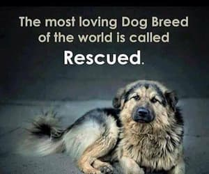 canine, love only love, and save all animals image