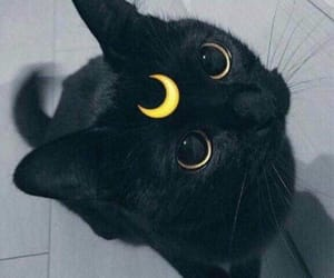 animals, meow, and black image