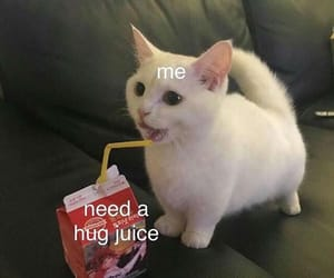 hug, cat, and funny image