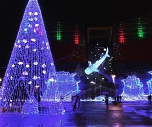 aquarium, christmas, and japan image