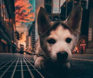 dog, city, and puppy image