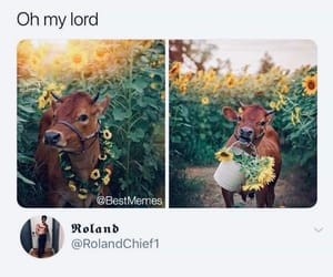 animal, brown, and cow image