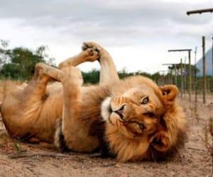 animal, beautiful, and fun image