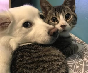 cat, dog, and pets image