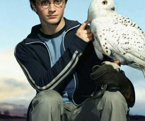 harry potter, hedwig, and magic image