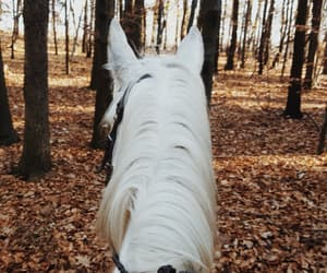 autumn, beautiful, and equestrian image
