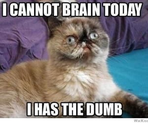 cat, funny, and dumb image