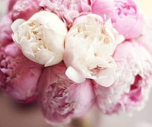 bouquet, flowers, and peonies image