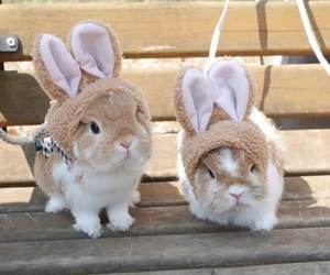 rabbit and cute image