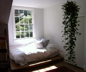 bed, plants, and room image