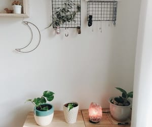 aesthetic, bedroom, and cactus image