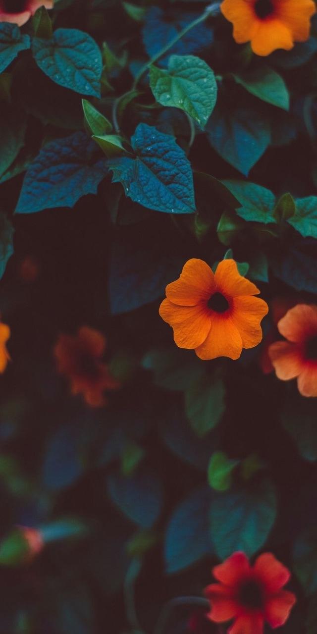 Flower Nature Wallpaper Tumblr Fondo Girly