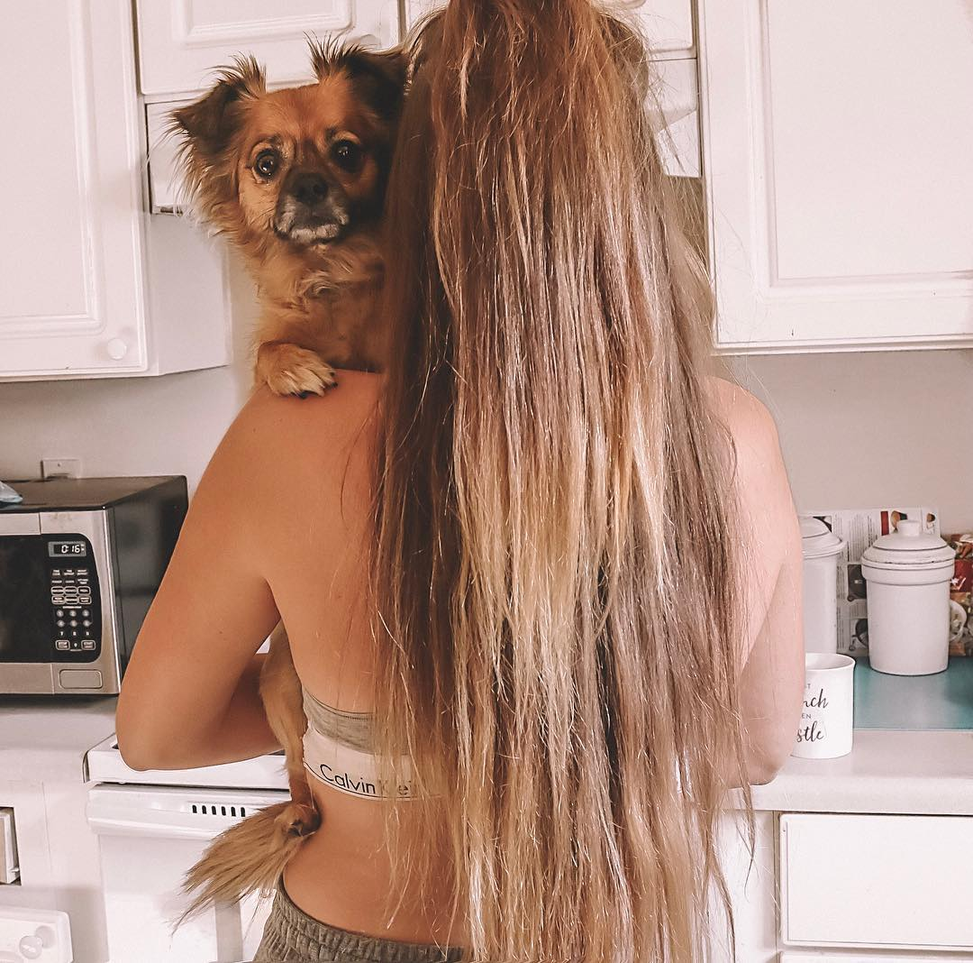 hair, hairstyles, and puppy image