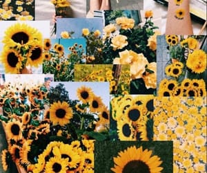 flowers, random, and sunflowers image
