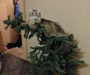 cats and christmas image