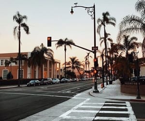 aesthetic, palm trees, and photo image