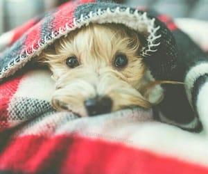 animal, blanket, and dog image