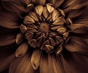 beauty, flower, and meaning image
