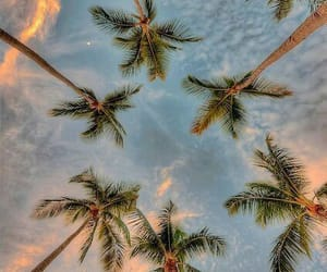 sky, warm, and tall palm trees image
