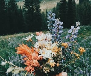 flowers, nature, and wild image