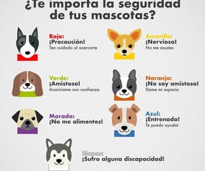 animals, puppy, and cachorros image