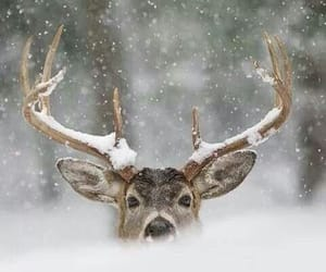 snow, winter, and animal image