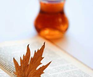 book, tea, and صباح الخير image