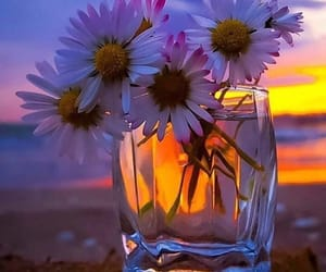 beauty, colors, and flowers image
