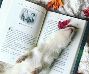 """Brooke   Slytherpuff   INFJ on Instagram: """"Ghost is such a dramatic diva 😂 🐾 QOTD: What is your most favorite book trope? 🐾 @a_feast_of_pages tagged me in"""