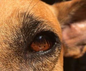 beauty, cachorro, and dog image