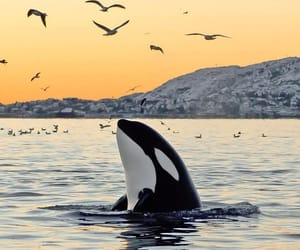 whale and orca image