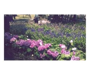 decoracion, morado, and purple image
