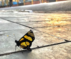 amarelo, borboleta, and butterfly image