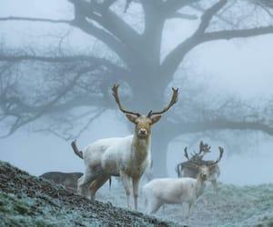 animal, autumn, and winter image