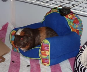 archive, cyber, and guinea pig image