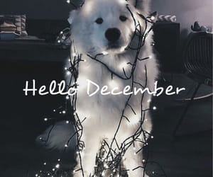 december, dog, and lights image