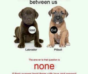 respect, be their voice, and pit bulls image